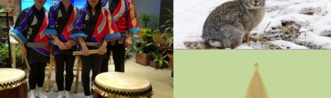 Animals, Drumming, Games and  a Movie ... At the Library Over the Holidays!