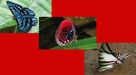Rain Forest Butterflies Coming to the Library on March 10!