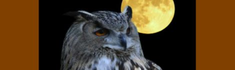 Spring Break Programs: Owls, Graham Clarke Music and Two Movies!