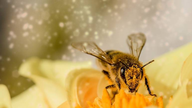 Celebrate Our Planet's Pollinators for Earth Day
